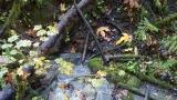 Hiking through Geyser Park- Washington