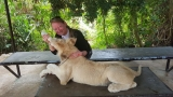 Just a typical day in the Philippines feeding a lion.