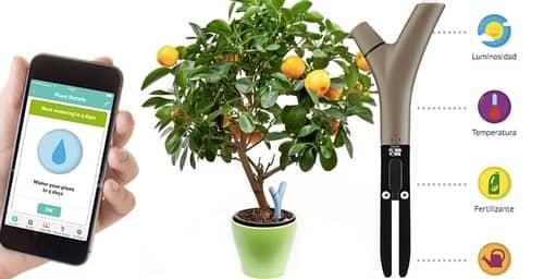 Cuida tus plantas con Flower Power