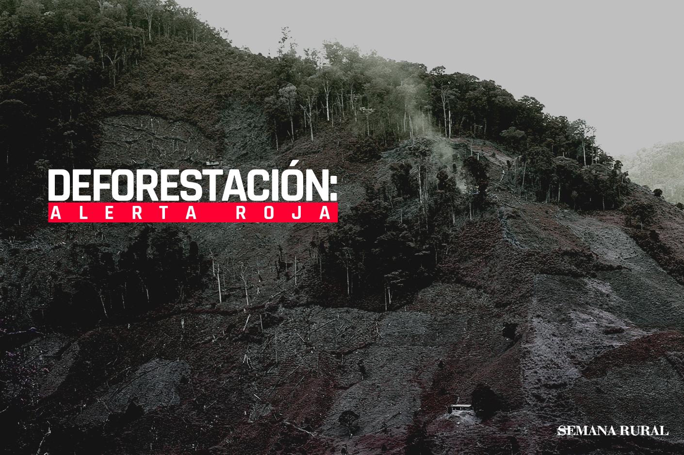 Así están desapareciendo los bosques y las selvas en Colombia
