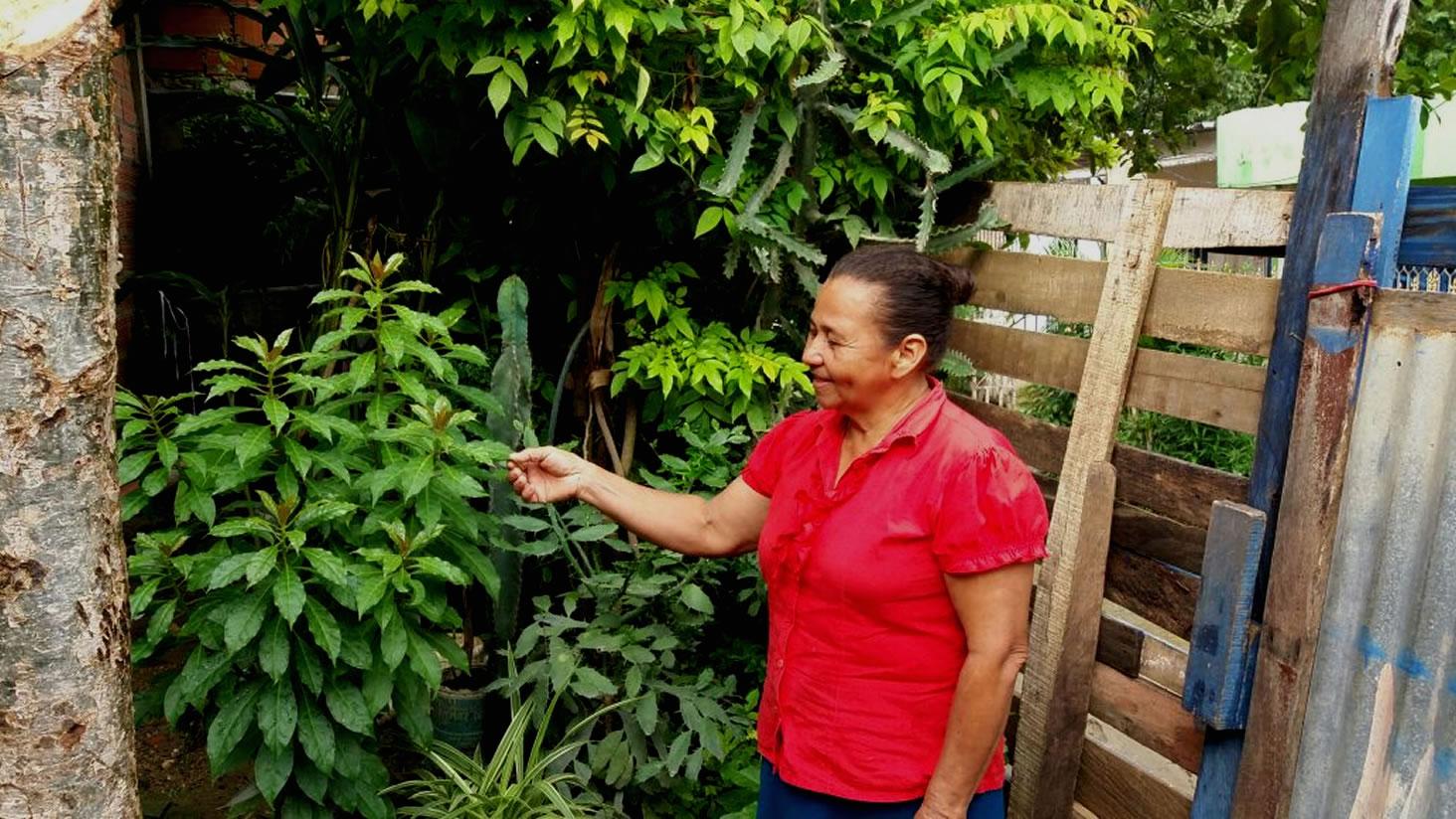 Huertas, símbolo de resistencia en un barrio popular de Cartagena