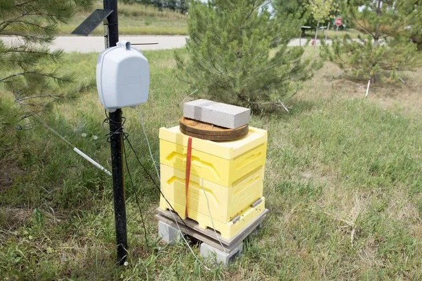 Adding Sensors to Monitor Hive Health