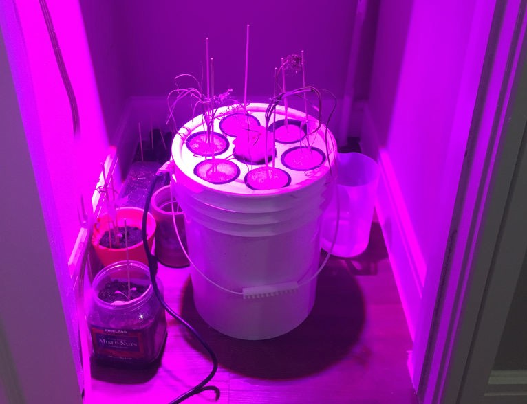 Grow lettuce for life with the Arduino 101