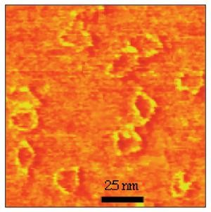 MAC Mode® AFM Studies of Zinc-Induced DNA Kinking