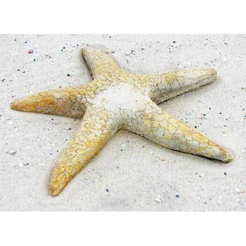 Starfish Giant 30