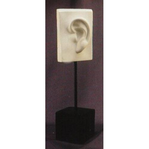 David Ear On Pole