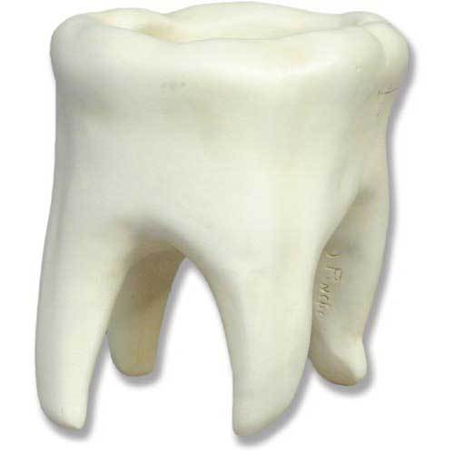 Tooth Small   7 H
