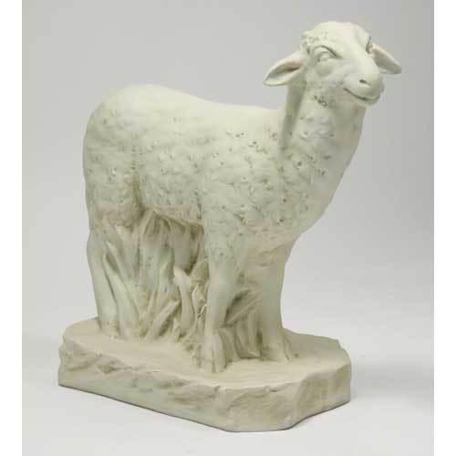 Sheep Standing 23