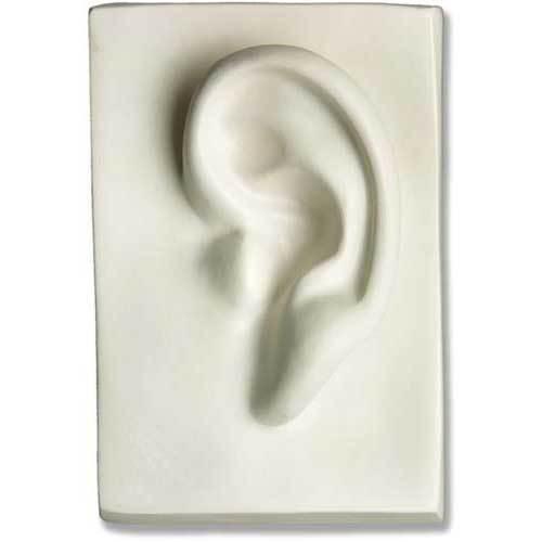 Left Ear 7