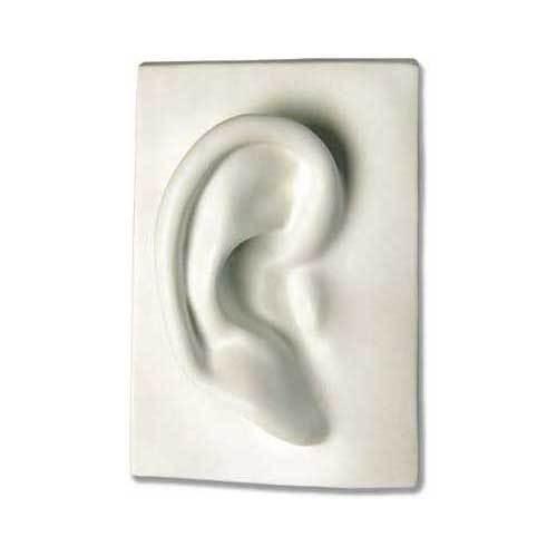 Right Ear 7