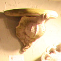 Conch Shell Bracket