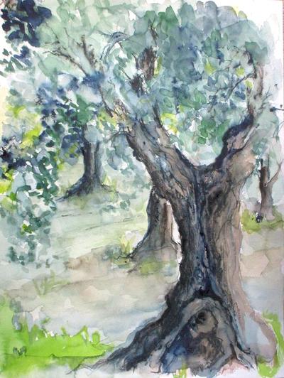 Olivenbaum crop