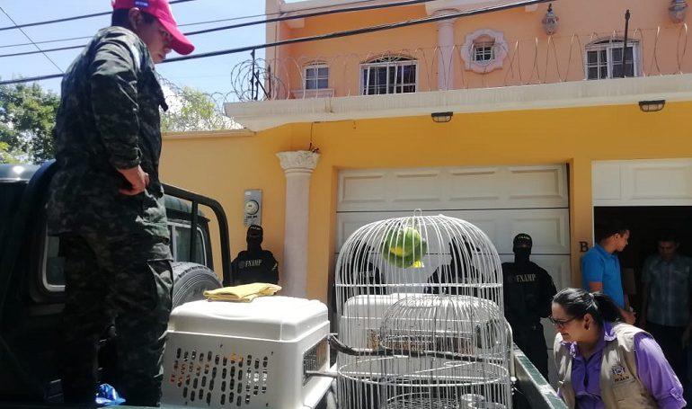 "FNAMP incauta animales exóticos en lujosa casa del ""Cholo Houston"""