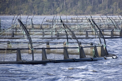 Salmon farming in Tasmania.