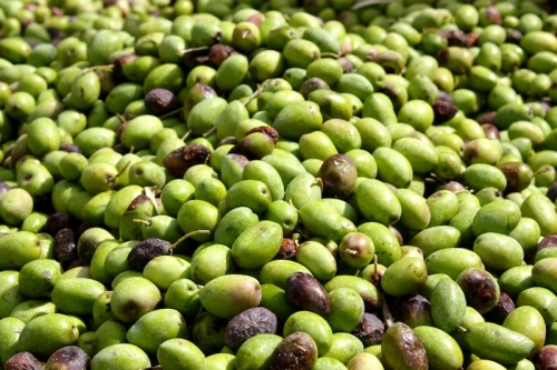 Jordanian Olives from Tour