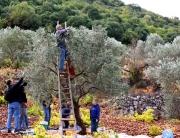 Jordan Olive Harvest Tour