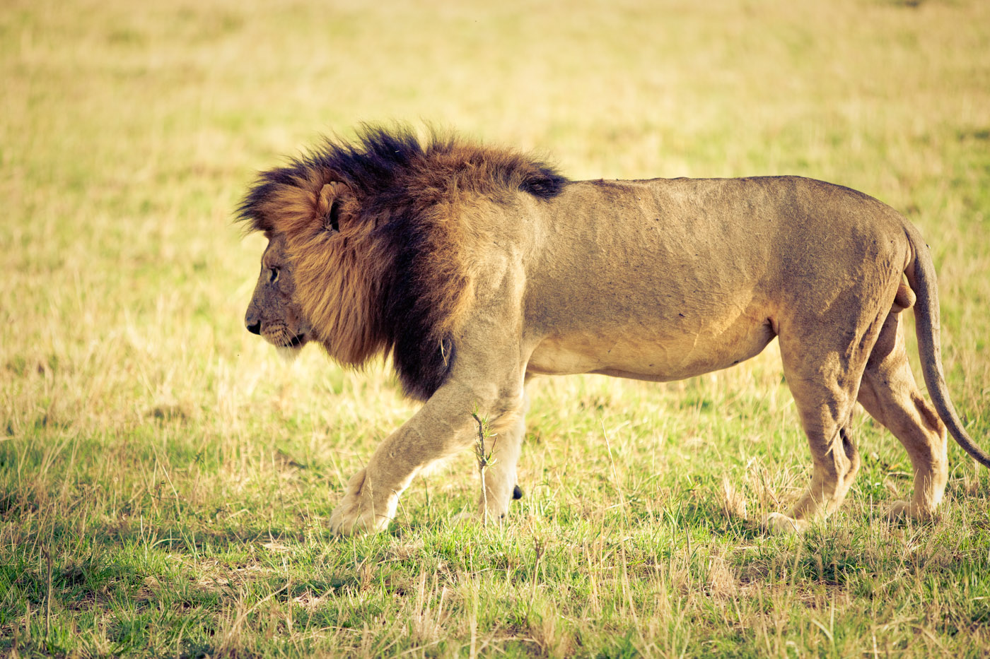 Safari_163