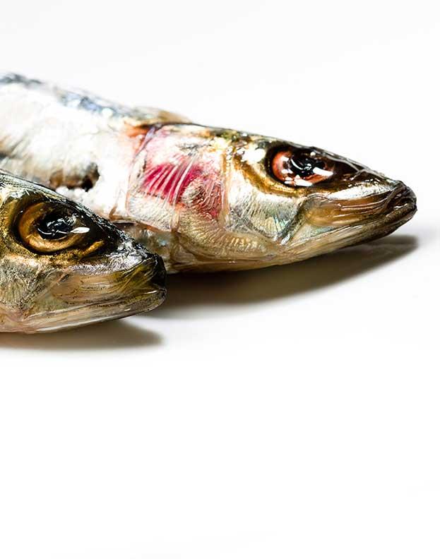 Studiofood_sardines_088