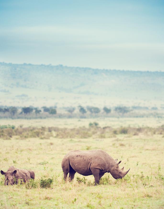 Safari_361