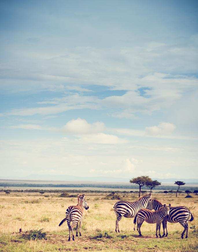 Safari_365