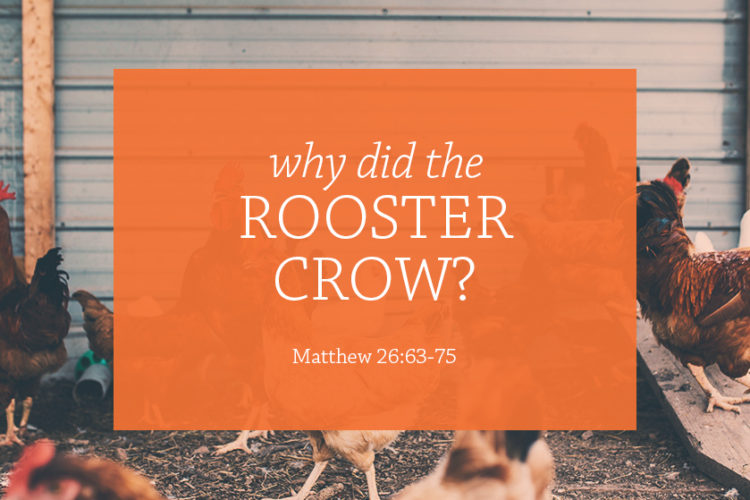 Why Did the Rooster Crow?