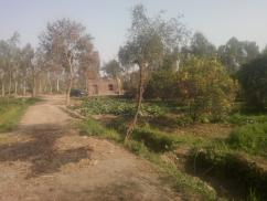256 Kanal Ample Location Agricultural Land For Sale
