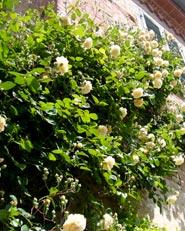 Un giardino a cavallo tra Langhe e Monferrato