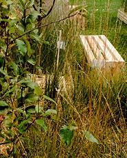 Il giardino del sapore ritrovato | orticolario 2013