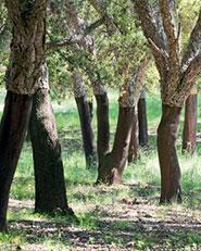 National Arboretum Canberra