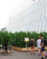 A pop-up field in the centre of the city.