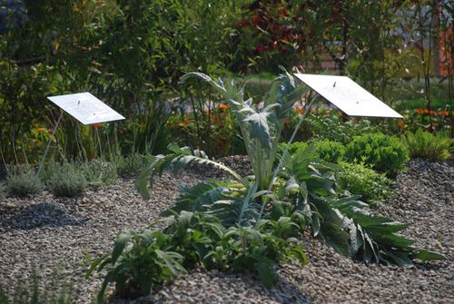 Atelier delle verdure giulia uva marco sessa barbara - Alberi bassi da giardino ...