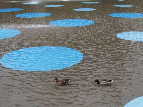 Ndo_bigsky_ducks_large