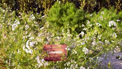 FAUSTA OCCHIPINTI — Giardino botanico la Fortezza