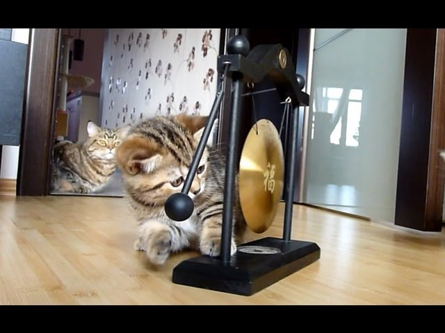 Cute Kittens playing gong | Funny Cats musicians