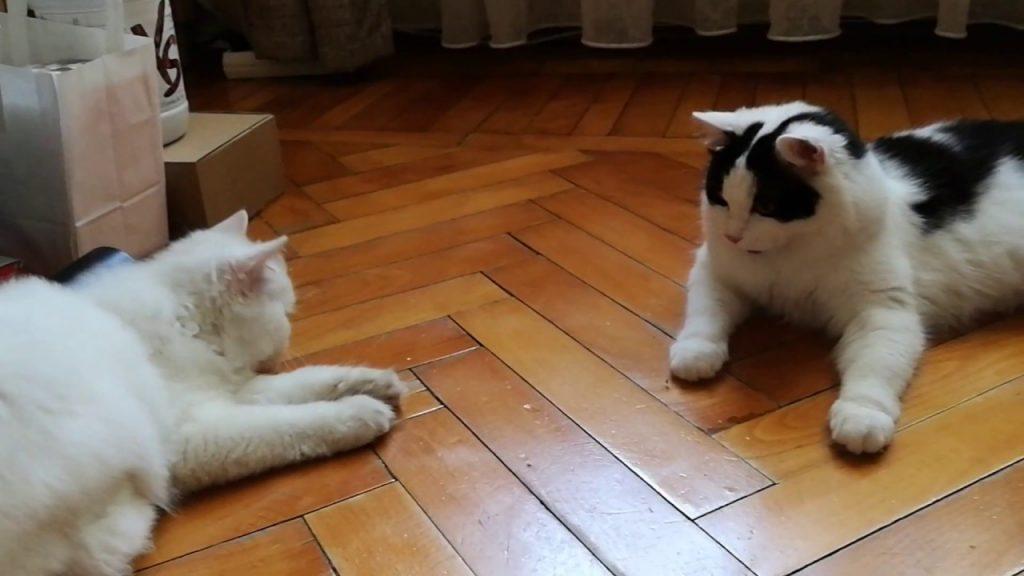 FUNNY CATS Pisici la vanatoare