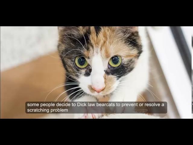 cat care tips : Destructive Scratching