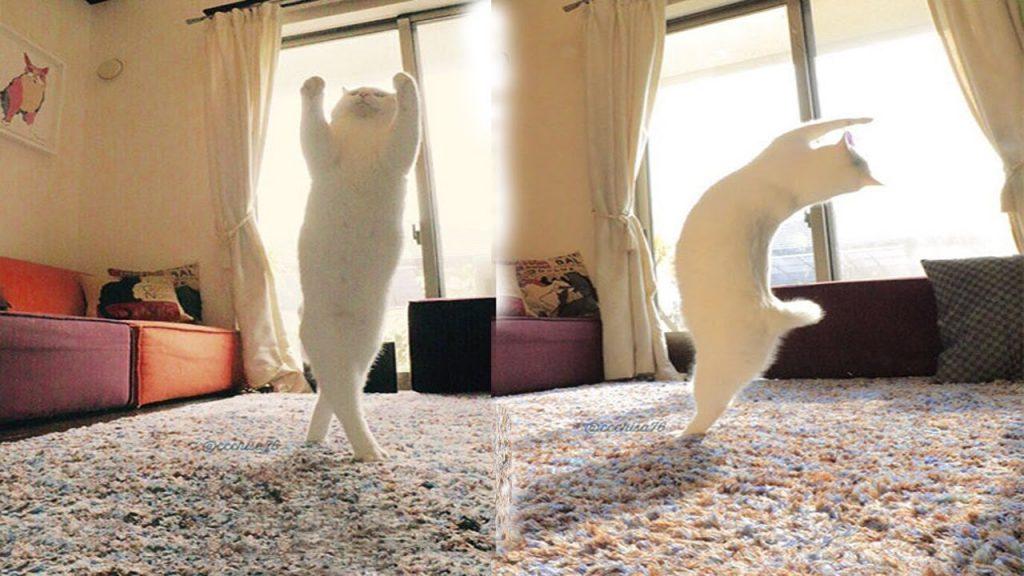 TOP funny Cats dancing like super Dancer |TOP Cats video Compilation