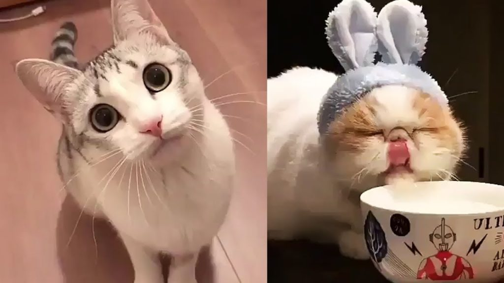 FUNNY CATS COMPILATION 2017 YOU MUST SEE ||   FUNNY CAT VIDEOS #09
