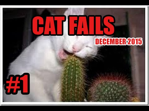 FUNNY CAT VINES GONE WRONG COMPILATION 2016 – CAT FAILS COMPILATION #1
