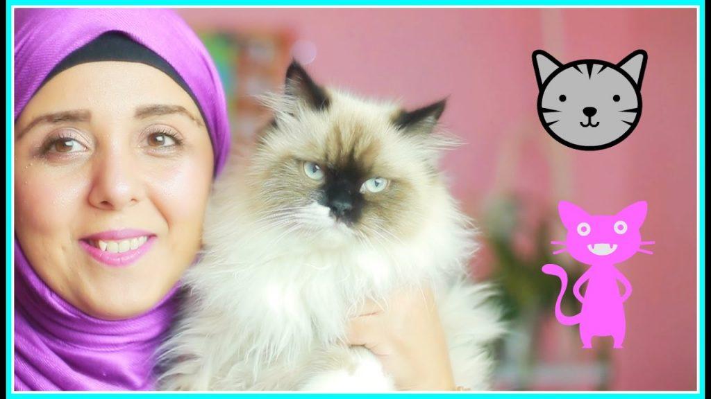 تربية القطط ١ | العناية بالقطط | كل ماتريد معرفته