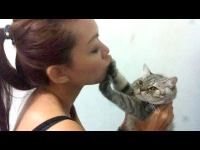 Funny CATS always MAKE US LAUGH HARD – The FUNNIEST CAT compilation