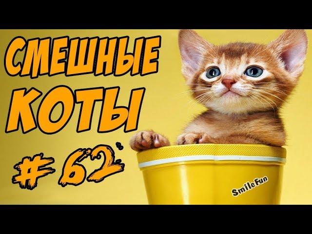 Смешные Коты Приколы с Кошками Видео Приколы С Котами ДО СЛЁЗ Funny Cats 2017