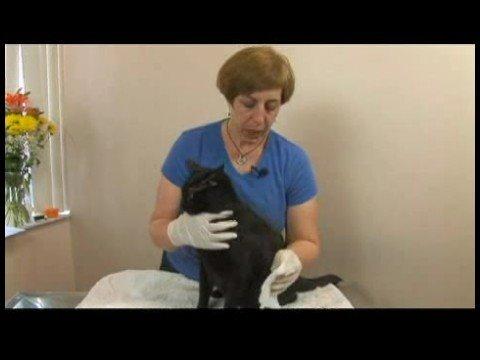 Common Cat Medical Problems : Bleeding Cat Care