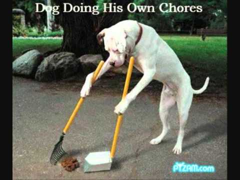 Funny Cats And Dogs! :D