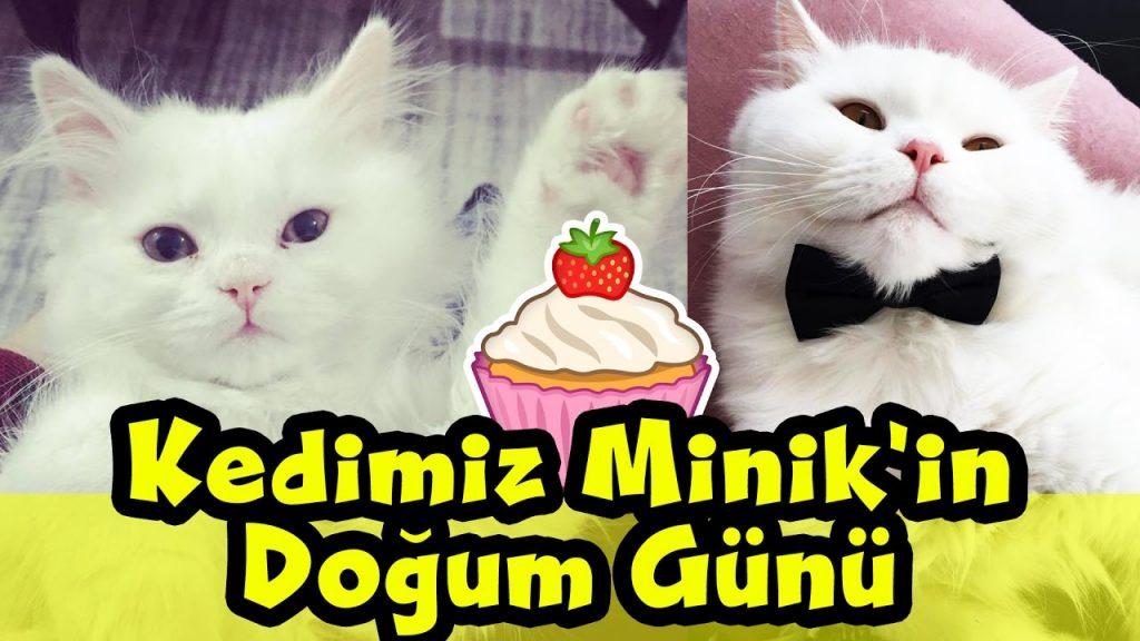 Kedimiz Minik'in Doğum Günü Partisine Hoşgeldiniz // Cat Birthday // Cat Care // vLog