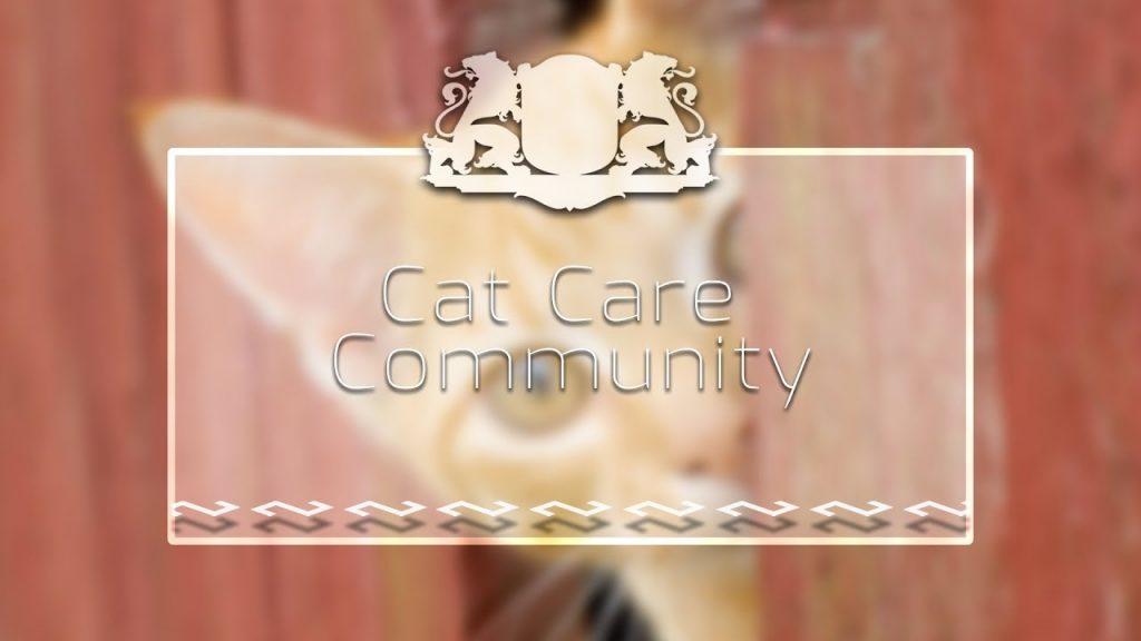 NVO TV Rīgai un sabiedrībai // Cat Care Community