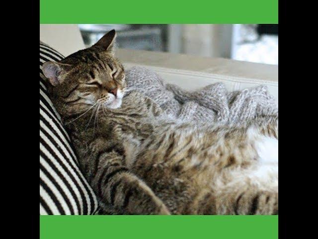 Loudoun Cat Care