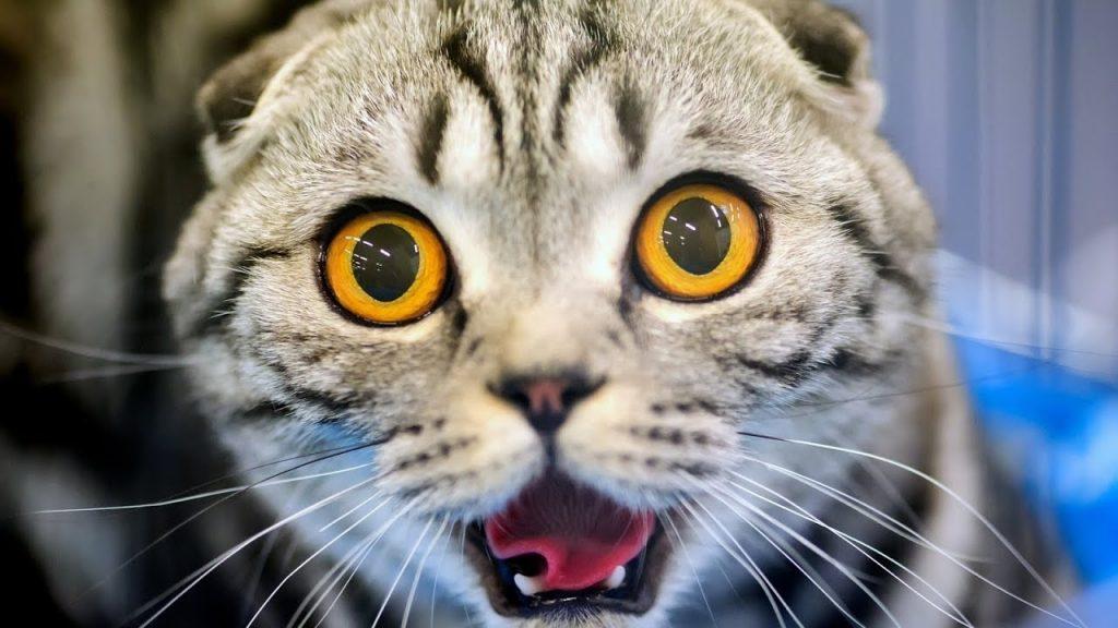 Смешные коты 2017 ТОПовая Подборка. Лучшие Приколы с котами. Funny Cats Compilation 2017 #2
