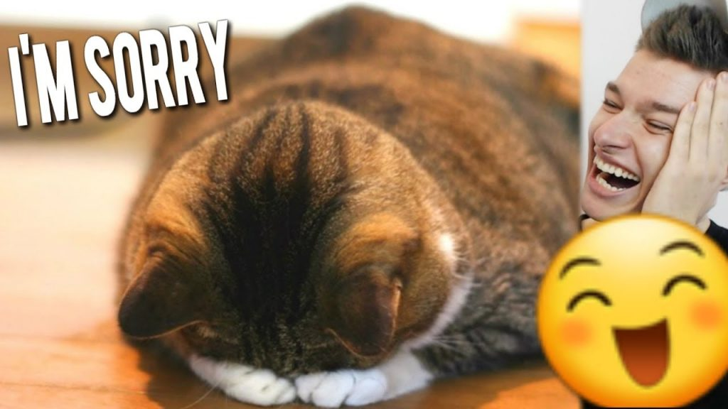 Funny Cats Saying Sorry For Being Bad!