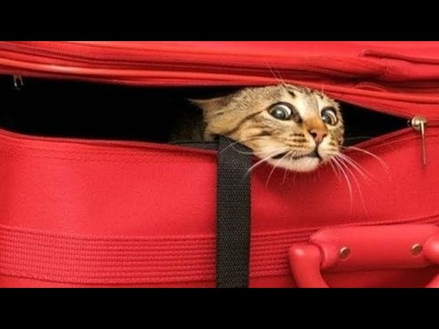 FUNNY CATS that will make your BELLY HURT FROM LAUGHING – Funny CAT compilation